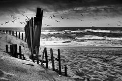 Dunas (josebrito21) Tags: josébrito josebrito2 josébritophotography josébritofotografia josébritofotos blackwhite pretoebranco portugal miramar praia dunas mar black white