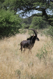 Namibia Luxury Hunting Safari 309