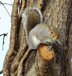 One of our Squirrels
