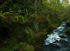 Wassergeister (lebastian) Tags: panasonic dmcfz1000 river fluss longexposure langzeitbelichtung sachsen elbsandstein sächsischeschweiz
