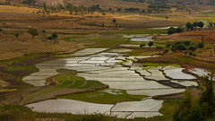 Rice fields (Glassholic) Tags: madagascar landscape countryside rice field
