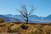 Owens Valley-54 (Denise Noelle Photography) Tags: owensriver bishopca sierranevadamountains monolake lonepine junelake mammothlakes