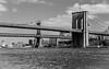Tale of Two Bridges (Katrina Wright) Tags: dsc5780 newyork brooklybridge manhattanbridge nyc metal monochrome bw