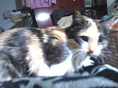 My adorable Pixie! (d.kevan) Tags: cats animals pixie madrid myflat