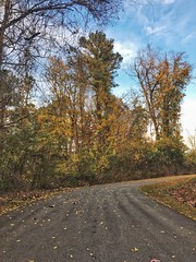 Bending corners Tree Autumn Road The Way Forward No People Day Outdoors Sky Nature Tranquility Tranquil Scene Leaf Beauty In Nature Scenics (mikedunnit) Tags: tree autumn road thewayforward nopeople day outdoors sky nature tranquility tranquilscene leaf beautyinnature scenics