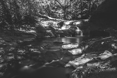 In the heart of the forest. (Pablin79) Tags: trees lake forest river light plants blackandwhite white monochrome black shadows waterfall longexposure cascade stream flow outdoors rapids argentina creek footbridge freshwater misiones flowingwater dosdemayo ytororolodge