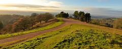 CLENT HILLS (chris .p) Tags: nikon d610 view clent hills worcestershire winter 2017 capture uk midlands december trees nt landscape nationaltrust