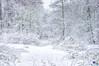 nikkiphotography-5068 (Nikkis Fotosite) Tags: snow winter wonderland snowing ruhrpott essen love more getlost explorer optoutside worldshotz theworldshotz createexplore exploretocreate discoverearth travelphoto travelworld keepexploring globetravel theglobewanderer roamtheplanet letsgosomewhere exploretheglobe nakedplanet placeswow instapassport instatraveling igtravel travelblog instago mytravelgram travelingram sharetravelpics worldtravelpics stayandwander keepitwild rei1440project earthfocus ourplanetdaily earthofficial natgeo nationalgeographic awesomeearthpix travelstoke