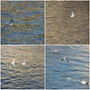 Sunday morning on the Seine (overthemoon) Tags: france paris seine river birds gulls mosaic four blue gold collage flying water