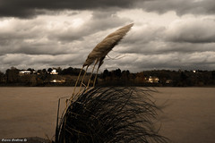 automne froid-1 (cobanene) Tags: gironde stsulpice izon dordogne nouvelleaquitaine france fr