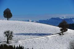 Winter bei Krautberg Oberthal am 17.11.2017 (Martinus VI) Tags: oberthal möschberg emmental kanton canton de bern berne berna bernese berner automne schweiz suisse suiza switzerland svizzera swiss y171117 martinus6 martinus6xy martinusvi martinus