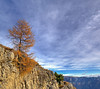 Standing still (Robyn Hooz) Tags: monte monteverena abete pine cliff montagna cielo sky asiago italy vicenza nuvole clouds strength