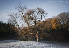 Warmth On A Cold Frosty Morning (.Brian Kerr Photography.) Tags: photography cumbria edenvalley landscapephotography renwick autumn trees frozen frosty cold coldmorning colours briankerrphotography briankerrphoto sony a7rii outdoor outdoorphotography opoty nature naturallandscape natural landscape tree forest sky