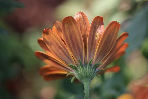 Still flowering in the garden