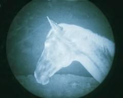 head space (Jen MacNeill) Tags: snapseed film microscope experimental alternative 35mm horse horses equine art littledoglaughednoiret