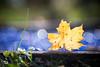 blue bubbles (madtacker) Tags: outdoor natur makro detail vintage art bokeh bubbles meyergörlitz trioplan 100mm nikon d800 deutschland