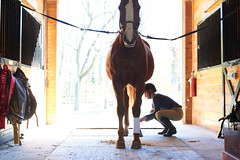 A senior working student preparing her project horse for a lesson