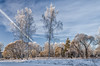 A scenery at the very frosty winter day in the suburbs of Saint Petersburg. Bogoslovka manor. (g_reg_walker) Tags: russia birch tree cold park landmark attraction scenery morning woods pine forest winter sky sight frost wooden snow bogoslovka petersburg
