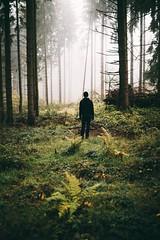 your own way (desomnis) Tags: nature fog mist misty foggy woods green trees 35mm sigma35mm sigma35mmf14art sigma35mmf14 canon5dmarkiv canon5d canon 5d dof bokeh mühlviertel austria österreich upperaustria desomnis