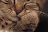Relax ...✅ (Julie Greg) Tags: cat pet animal sleep relax