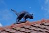 cat on a rooftop (Roel Wijnants) Tags: ccbync roelwijnants roelwijnantsfotografie roel1943 catonarooftop beeld kat dakpannen dak decoratie ceramic keramiek wandelvondst wandelen fiesten denhaag thehague absolutelythehague city hofstijl haagspraak leesdegebruiksvoorwaarden