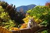 DSC07191 (kriD1973) Tags: europa europe italia italien italy italie alpi alpen alps alpes montagna berge montagne mountains trentino gebirge berglandschaften valdisole malè bolentina pets haustiere animali domestici cat gatto katze chat pet cats gatti chats katzen gato felino animal animale tier