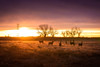 Deers (3dRabbit) Tags: deer family animal morning sun sunshine color denver usa sungjinahn nikon 85mm d810