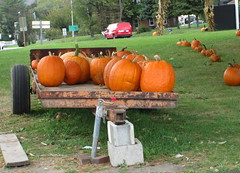 Pumpkin Trailer. (dccradio) Tags: cavetown smithsburg md maryland produce producestand ag agricultural farm farming agriculture pumpkin pumpkins orange fall autumn harvest grass lawn yardgreenery tree trees greenery outside outdoors orchard mountainvalleyorchard canon powershot a3400is