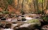 Where peaceful Waters flow (marionrosengarten) Tags: ilse water river flowing longexposure autumn harz colourful nikon stones wood germany nature sigmaart1835f18 peaceful sachsenanhalt