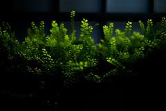 Bioluminescence (Rob₊Lee) Tags: plants leaves hanging green neon bioluminescence glow dark abstract