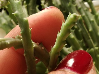 Fingers and Thorns for Macro Monday