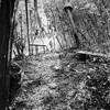 Hamacas (Gullita) Tags: hasselblad hamacas bosque