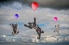 Flying Dogs (Chris Willis 10) Tags: clouds sky flying hotairballoon air balloon multicolored outdoors fun midair freedom blue movingup levitation happiness red joy adventure cloudsky people backgrounds dogs balloons