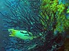 GOPR0926 (TerryZz) Tags: gopro 20something underwater marine travel france