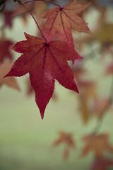 Le printemps de l'hiver * (Titole) Tags: leaves leaf titole nicolefaton mist