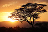 Tarangire (Chamaloote & Fabrizio) Tags: tanzanie tarangire couchédesoleil acacias afrique safari nature