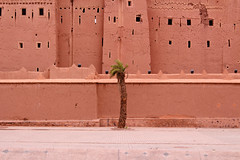 Lonely Palm Tree (T is for traveler) Tags: travel traveler traveling tisfortraveler photography digitalnomad exploration backpacker summer trip africa morocco desert tour ouarzazate history city epic palm trees green orange street lonely background wall everyday life