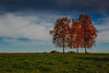 The 3 trees (DonKamilo1984) Tags: autumn blue green vintage nature trees lawn tree leaf leaves landschaft natur