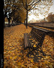 Yellow is here... (Felip Prats) Tags: girona gironès catalunya yellow groc amarillo autumn otoño tardor