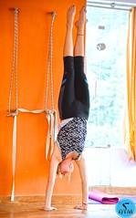 Handstand balance, body awareness, technique, and a ton of strength (AYM Yoga School India) Tags: handstand yoga yogapose wall people yogatraining journey yogi photography fitness motivation poseoftheday yogaeverydamnday