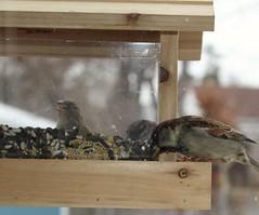 Bird watching (cynthiarobb) Tags: