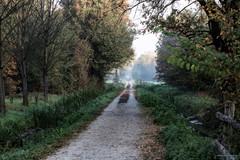 Passeggiando per il bosco (Silver_63) Tags: pioltello lombardia italia it