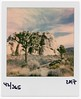 365project043.jpg (Michael Bartosek) Tags: color instant analouge polaroidonestep2 joshuatree film california 2017 johsuatreenationalpark polaroidoriginalscolor600 instantfilm jtree epsonv850scan michaelbartosekphotography 365project losangeles squarefilm polaroid colorfilm