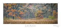 Late Autumn (baldwinm16) Tags: il illinois november autumn autumnleaves fall fallleaves forest landscape midwest nature outdoors outside sunrise woodland woods