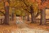 final fall flair (markstrohmjr) Tags: fall leavesautumn tree fence drive outside nikon nikond750 color