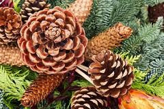 02112017_bergfriedh_0043_mL (speschlphotography_art) Tags: natural impression macro zapfen tannenzapfen pinecone zweige tannenzweige pilz herbst fall outum winter 2017 141217a
