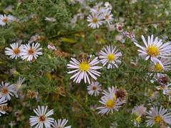 2017-11-09-11854 (vale 83) Tags: bee nokia n8 friends flickrcolour coloursplosion colourartaward beautifulexpression autofocus macrodreams