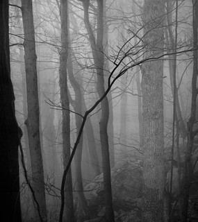 The ravine on a foggy day