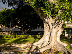 171208 Honolulu-03.jpg (Bruce Batten) Tags: shadows locations vehicles automobiles trips occasions trees subjects campuses buildings uh plants businessresearchtrips usa hawaii honolulu unitedstates us bruce people family