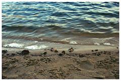 DSC_1936 (FMAG) Tags: 2017 żabieniec zalesie jesien lake